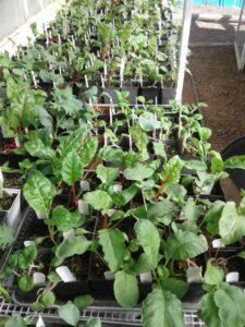 2017-sep-greenhouse-3y