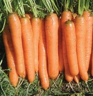 Carrots Yaya, Johnnys 2681G