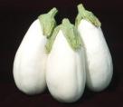 Eggplant, Clara