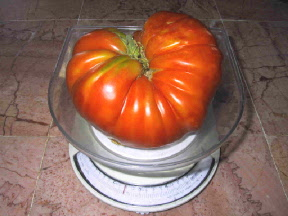 tomato-on-scale-1