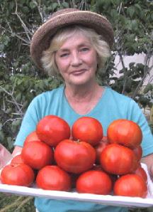 Hawaiian Tropic Sweet Tomato Test Garden